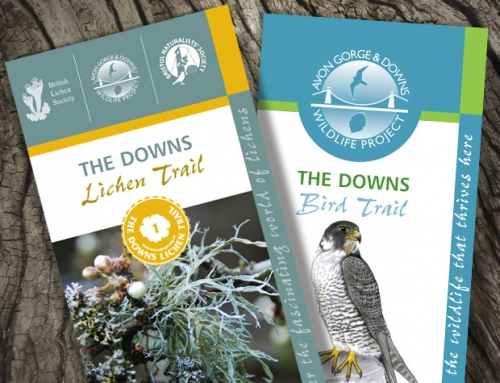 Avon Gorge & Downs Wildlife Project: Lichen, Tree & Bird Trails