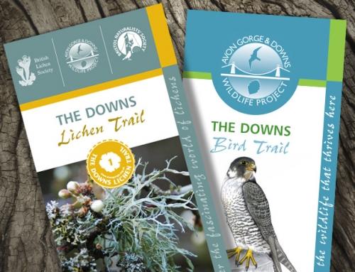 Avon Gorge & Downs Wildlife Project: Lichen, Tree & Bird Trails