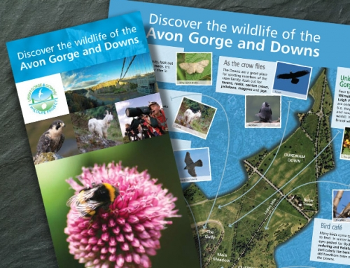 Avon Gorge & Downs Wildlife Project: Discover Wildlife