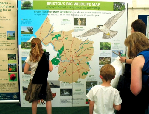 Bristol City Council: Bristol's Big Wildlife Project
