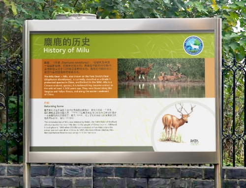 Bristol Conservation & Science Foundation: Milu Deer Nature Reserve (China)